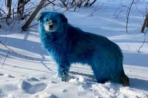 В російському Дзержинську помітили блакитних собак