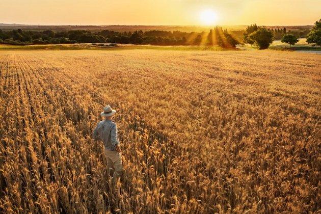 Зеленський схвалив зниження ПДВ для аграріїв до 14%