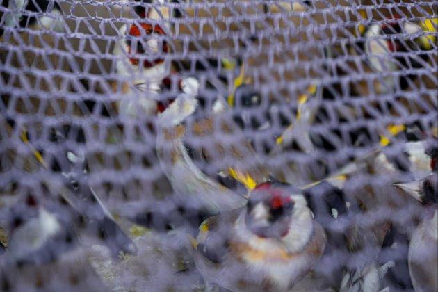 Понад 150 щигликів намагалися незаконно вивезти за кордон