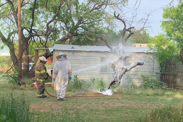 Африканські бджоли-вбивці до смерті закусали чоловіка в Техасі