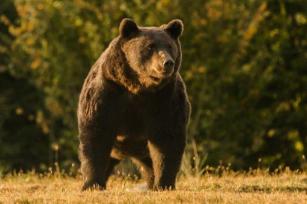 Принца Ліхтенштейну звинуватили в убивстві найбільшого в ЄС ведмедя