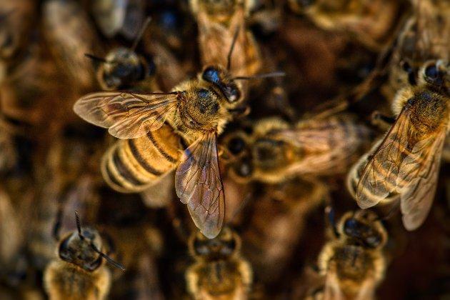 Бджоли, які загинули через недбалість «Укрпошти», «воскресли» (відео)