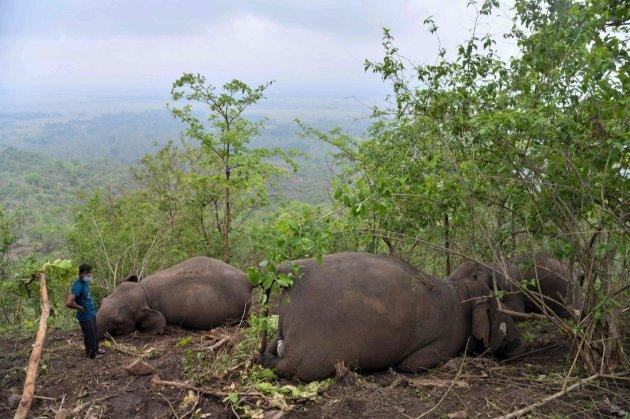 Вісімнадцять слонів загинули в Індії нібито від удару блискавки