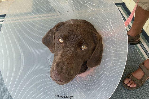 У Флориді чоловік врятував пса, якого ледь не проковтнув алігатор
