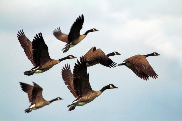Вчені порахували, скільки птахів живе на планеті. Вгадайте, якого виду найбільше