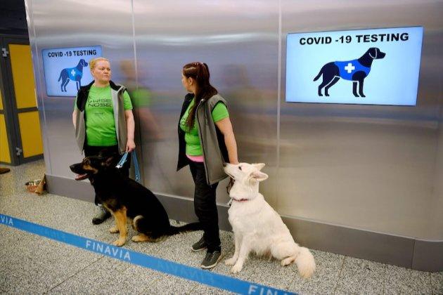 Собаки здатні діагностувати коронавірус краще за тест-смужки