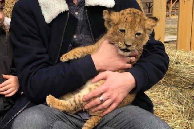 З контактного зоопарку на Київщині забрали левенят, які не можуть ходити (фото)