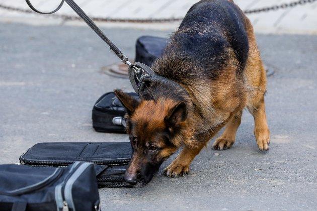 Через легалізацію канабісу у Вірджинії собак-шукачів достроково відправили на пенсію