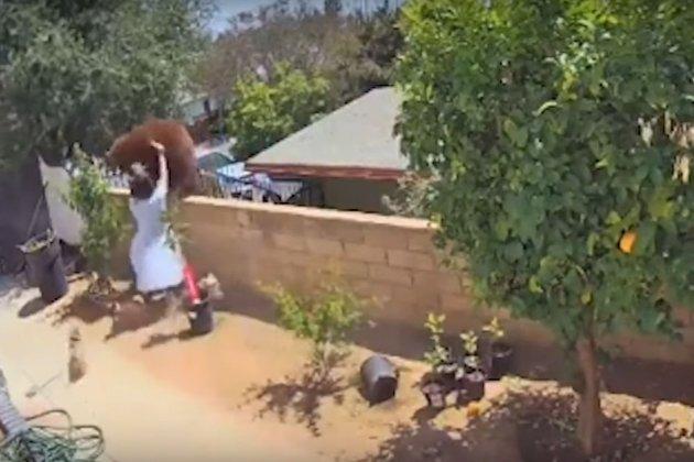 В США жінка голими руками зіштовхнула величезного ведмедя з паркану свого будинку (відео)