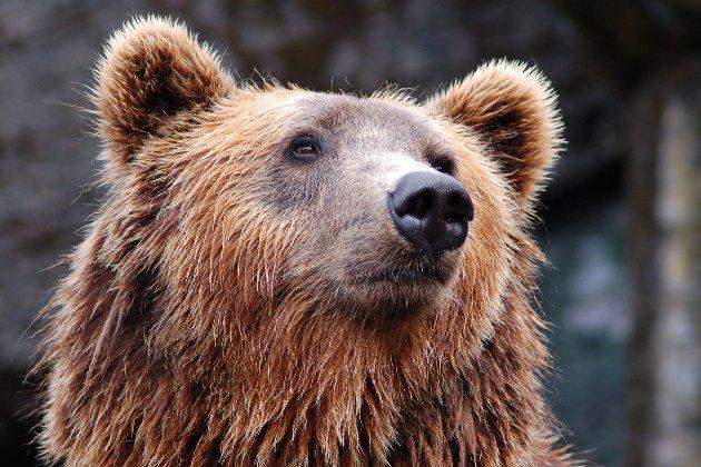 На балансі «Укрзалізниці» знайшли двох ведмедів. Їх відправлять на реабілітацію в Нідерланди