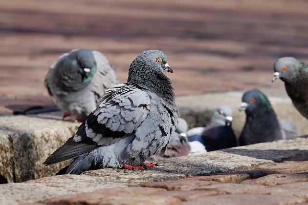 Виставка робіт Рафаеля Санті в Мадриді опинилася під загрозою атаки голубів