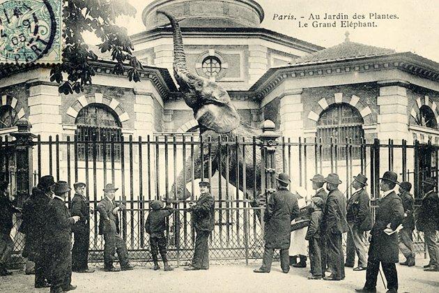 Фотоісторія. В цей день у 1793 році в Парижі створили перший в світі публічний зоопарк