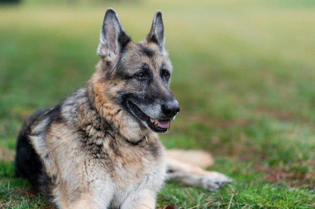 Байден повідомив про смерть одного зі своїх собак