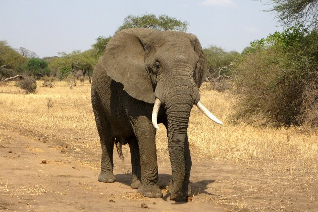У Таїланді зголоднілий слон пробив стіну кухні в пошуках їжі