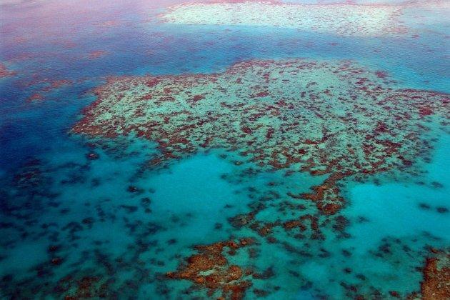 ООН заявила про загрозу зникнення Великого Бар'єрного рифу. Австралія оскаржуватиме цей висновок