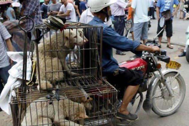 У Китаї стартував фестиваль собачого м'яса, незважаючи на протести зоозахисників