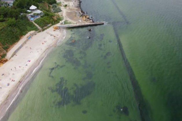 В Одесі «зацвіло» море: у воді вчені виявили небезпечну бактерію