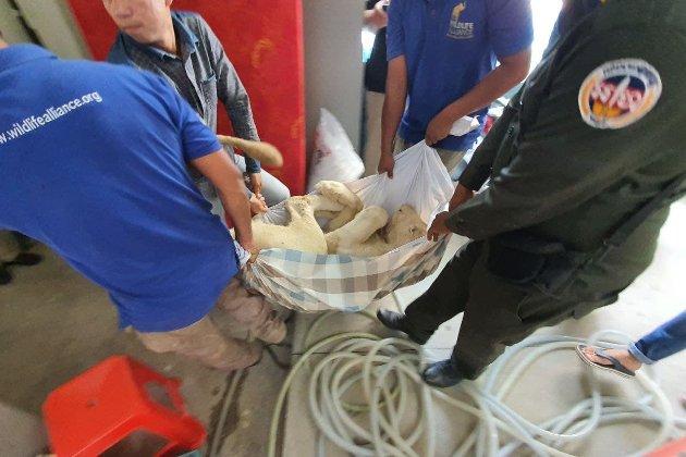 У Камбоджі домашнього лева конфіскували після відео в Tik-Tok