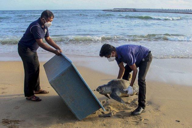 Після аварії на танкері з хімікатами до берегів Шрі-Ланки винесло сотні мертвих морських жителів