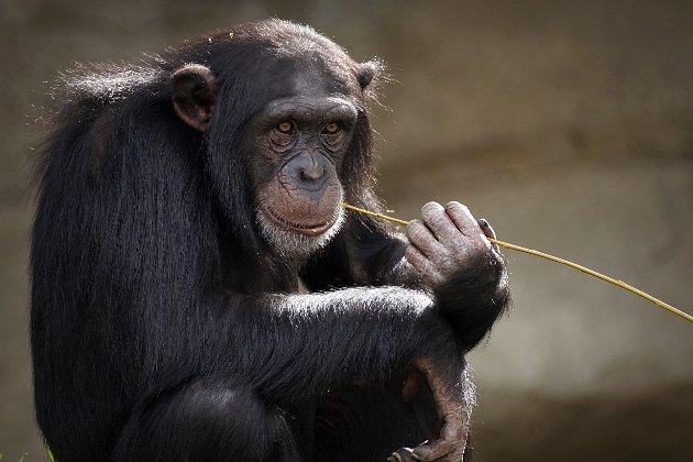 У Північній Каліфорнії зоопарк почав вакцинувати від коронавірусу тварин