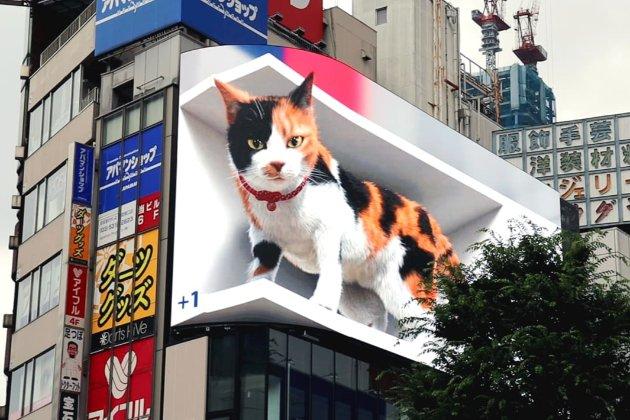 Гігантський та дуже реалістичний. В Токіо з'явився білборд з 3D-котом (відео)