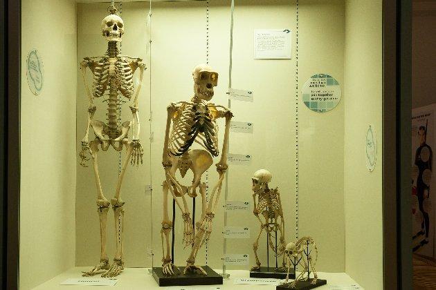 Вчені заявили, що зміни клімату вплинули на розмір тіла людини в процесі еволюції