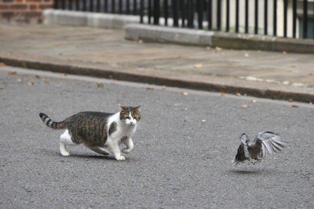 В Австралії запровадили комендантську годину для котів, щоб захистити птахів та рептилій