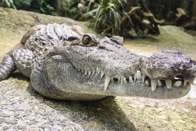 Мешканець Флориди намагався закинути на дах живого алігатора