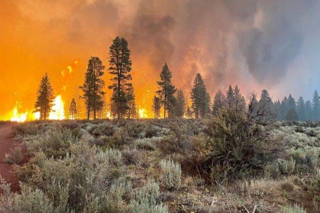 Через аномальну спеку в США вирують масштабні лісові пожежі