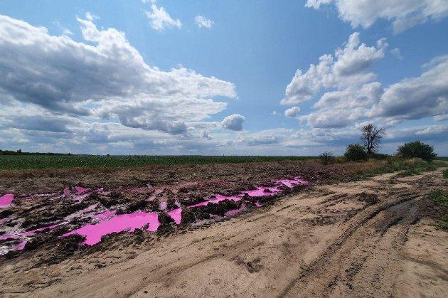 Полиция начала расследование из-за розовых луж с неизвестным веществом в поле под Ровно
