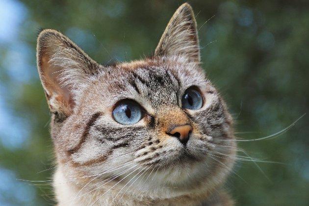 Коты чаще собак болеют COVID-19 — ученые