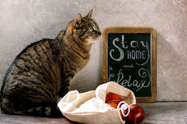 Коти віддають перевагу їжі, заради якої не потрібно напружуватися
