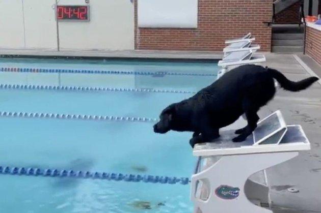 Американський плавець Келеб Дрессел навчив свою собаку плавати, як олімпійський чемпіон
