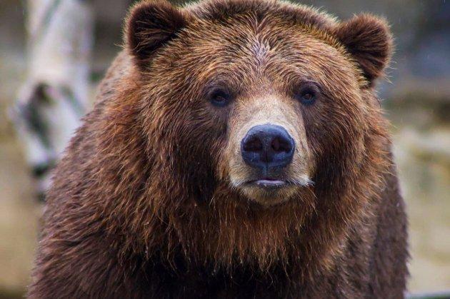 Жителя США напугал медведь из мусорного контейнера. Мужчина подал в суд