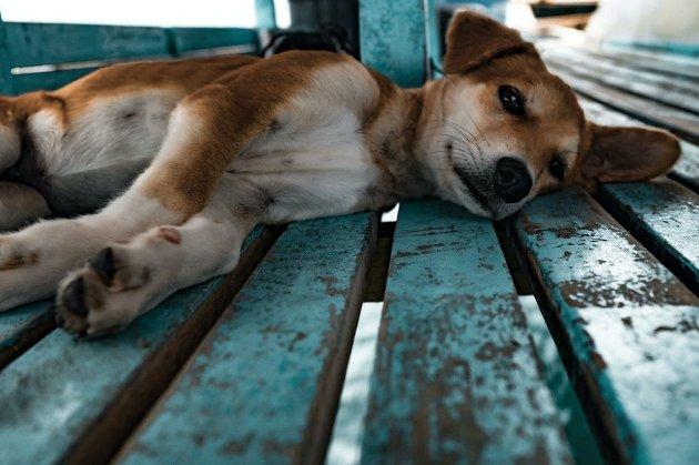 15 собак застрелили в австралійському притулку, щоб «уникнути поширення COVID-19»
