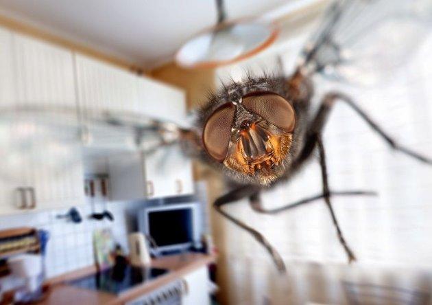 Чоловік підірвав будинок, намагаючись вбити муху