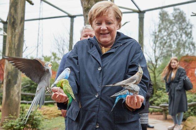 Ангелу Меркель під час візиту до пташиного парку атакував агресивний папуга. Вона відреагувала дуже емоційно (фото)