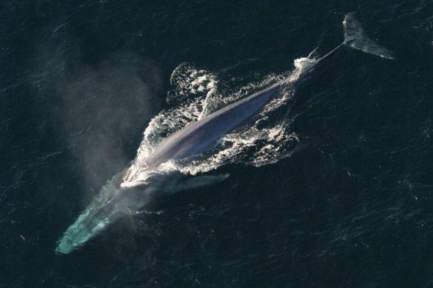 Вчені з'ясували вік останків кита, знайдених поблизу української антарктичної станції «Вернадський». Їм 1350 років (фото)