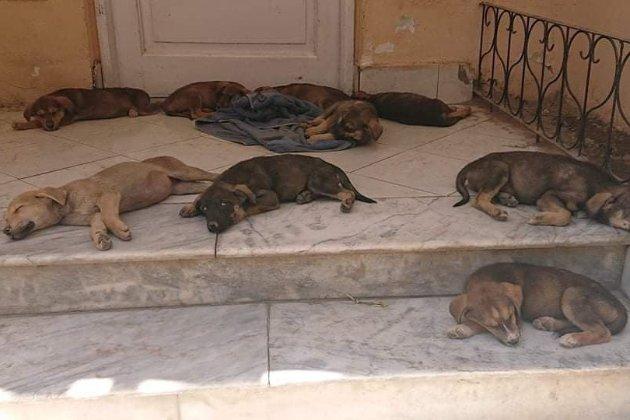 З Афганістану не встигли евакуювати 130 собак, яких не пустили на борт літака