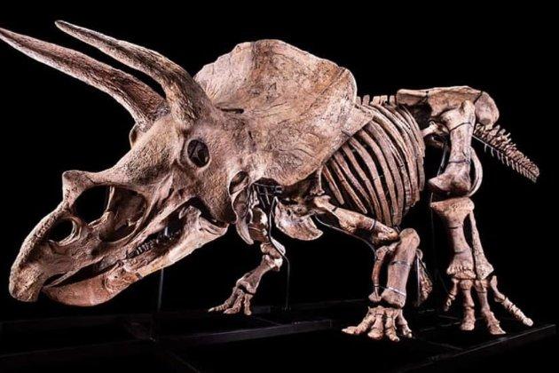 Найбільший у світі скелет трицератопса продадуть на аукціоні в Парижі. Ціна може сягнути $1,7 млн