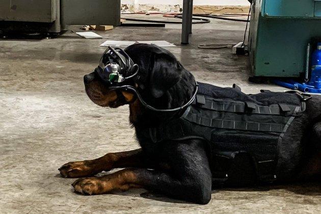 Вчені США тренують військових собак в окулярах доповненої реальності
