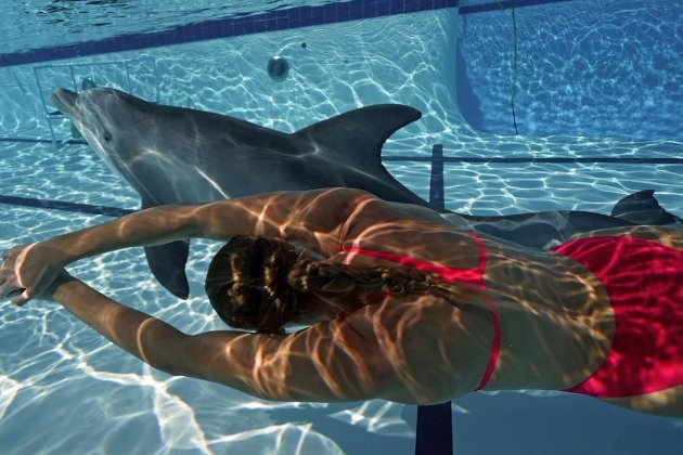Робот-дельфін зможе замінити тварин у неволі