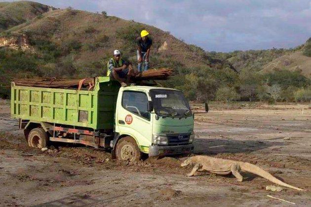 Врятувати драконів. Активісти занепокоєні «парком Юрського періоду» в Індонезії
