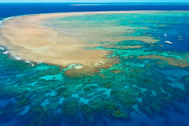 На австралійському Великому Бар'єрному рифі вчені виявили 500-метровий кораловий риф розміром з хмарочос