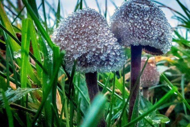 У день виборів у США пройшли «наркотичні» референдуми: у Вашингтоні підтримали легалізацію «психоделічних грибів»