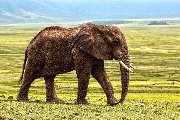 Аукціон з тваринами. Намібія виставить на продаж 170 слонів через посуху і зростання популяції