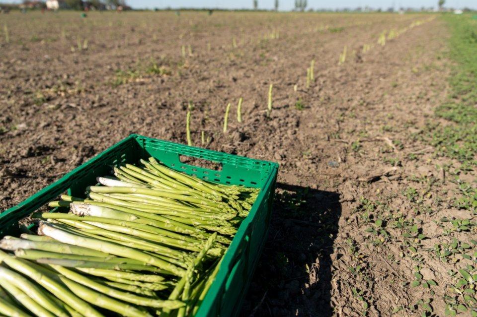Лише одиниці ферм готові інвестувати у постврожайне виробництво, правильне охолодження і зберігання, сортування