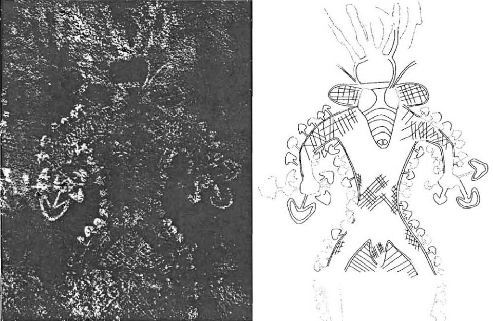 Людина-гриб з печери Маталем-Амазар