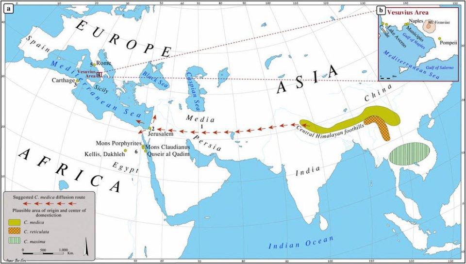 На мапі зображені місця походження та окультурювання цитрона (оливковий колір), мандарина (жовтий) та помело (зелений). Червоними стрілками позначений шлях цитрона до Європи / HortScience